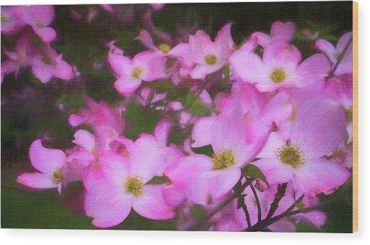 Pink Dogwood Flowers  Wood Print