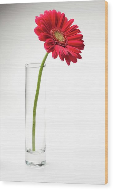Pink Gerbera Daisy In A Glass Vase Wood Print