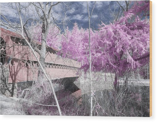 Pink Sachs Wood Print
