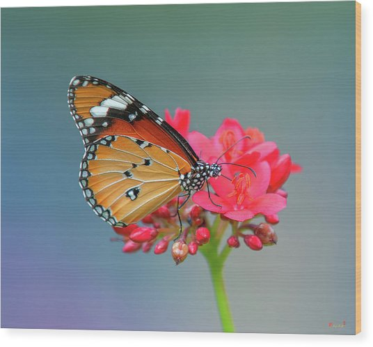 Plain Tiger Or African Monarch Butterfly Dthn0246 Wood Print