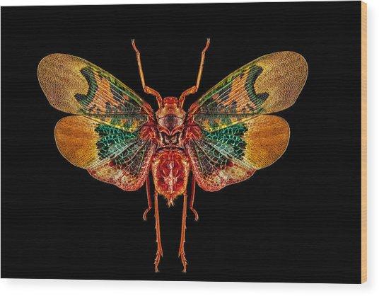 Planthopper Lanternfly Wood Print