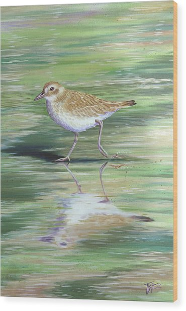 Plover Reflections Wood Print