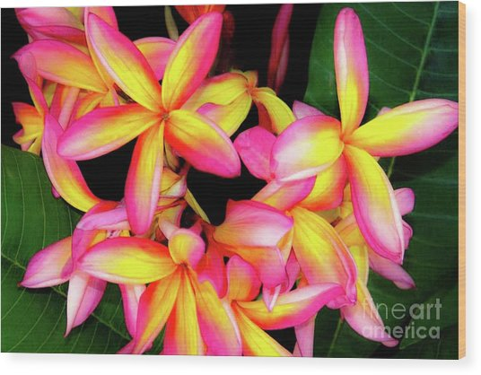 Plumeria Flowers - Tropic Hawaii Wood Print by D Davila