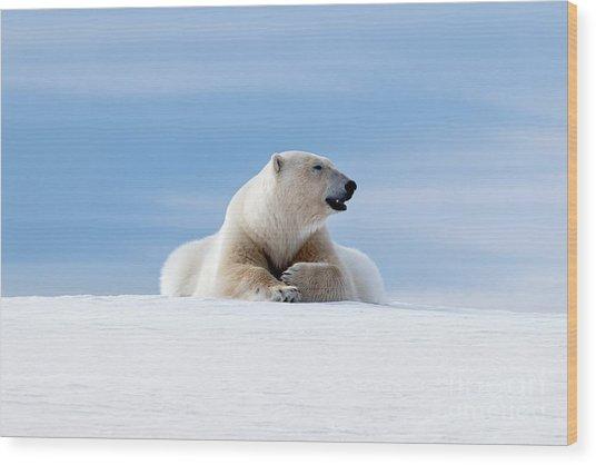 Polar Bear Laying On The Frozon Snow Of Svalbard Wood Print