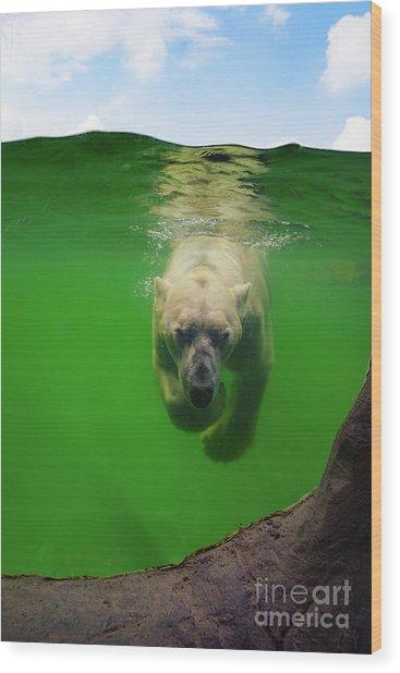 Polar Bear Underwater Wood Print