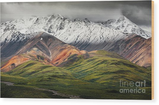 Polychrome Mountain, Denali Np, Alaska Wood Print