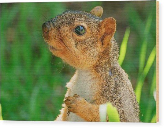 Pondering Squirrel Wood Print