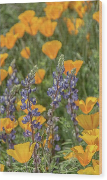 Poppies And Mountain Lupine 5585-030519 Wood Print
