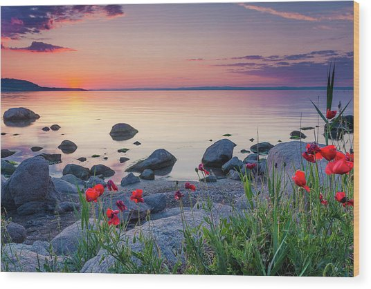 Poppies By The Sea Wood Print