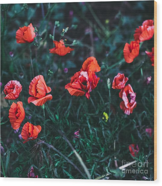 Poppies In The Field. Minimal Style Wood Print