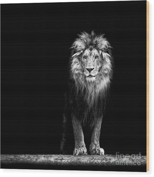 Portrait Of A Beautiful Lion, In The Wood Print by Baranov E