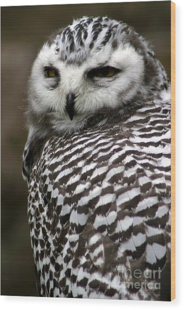 Portrait Of A Majestic Spotted Owl Wood Print