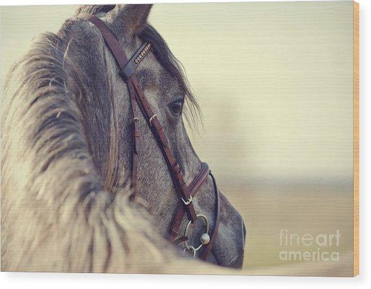 Portrait Of A Sports Stallion In A Wood Print by Elya Vatel
