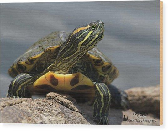 Portrait Of A Turtle Wood Print
