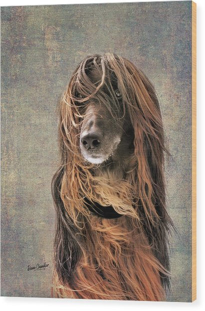 Portrait Of An Afghan Hound Wood Print