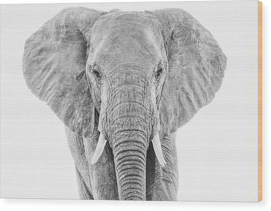 Portrait Of An African Elephant Bull In Monochrome Wood Print