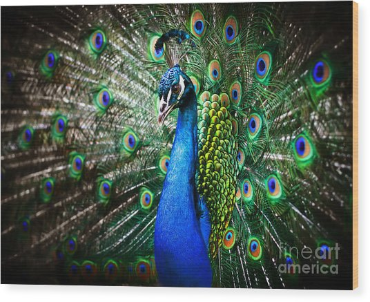 Portrait Of Beautiful Peacock With Wood Print