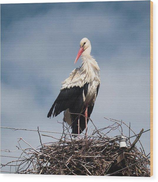 Portrait Of Stork. Horytsya, 2015. Wood Print