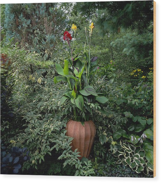 Potted Canna Lily Canna Wood Print
