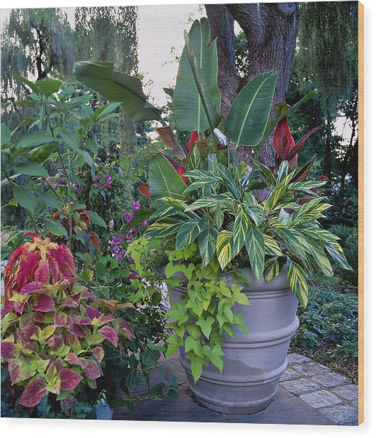 Potted Plants Including Bird Of Wood Print by Richard Felber