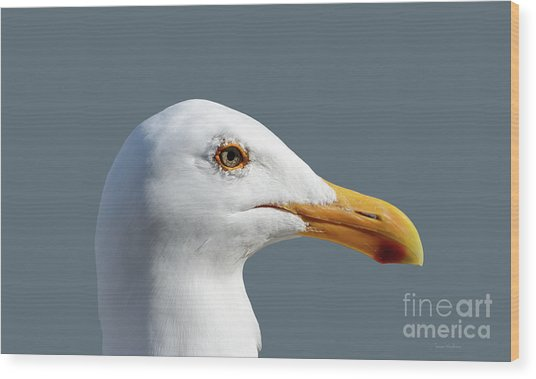 Pretty Western Gull In Profile Wood Print