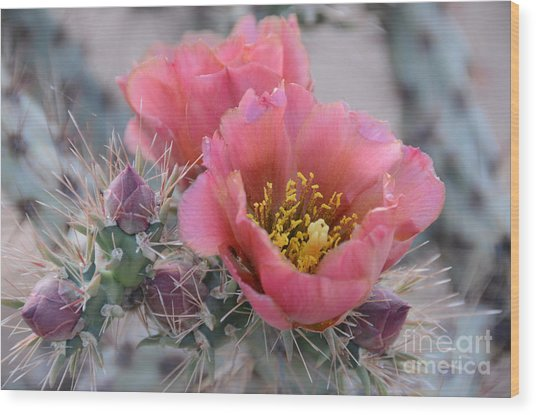 Prickly Pear Cactus With Pink Flowers Wood Print