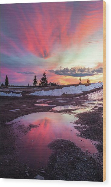 Puddle Reflection / Columbia Falls, Montana  Wood Print