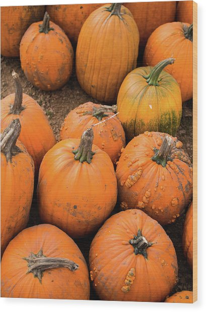 Wood Print featuring the photograph Pumpkins Of Different Shapes by Whitney Leigh Carlson