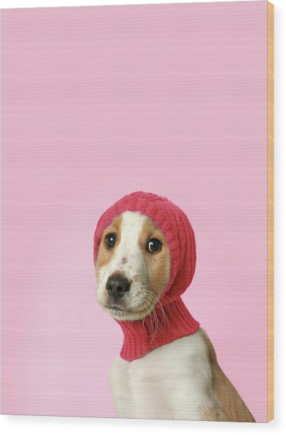 Puppy With Hat Wood Print