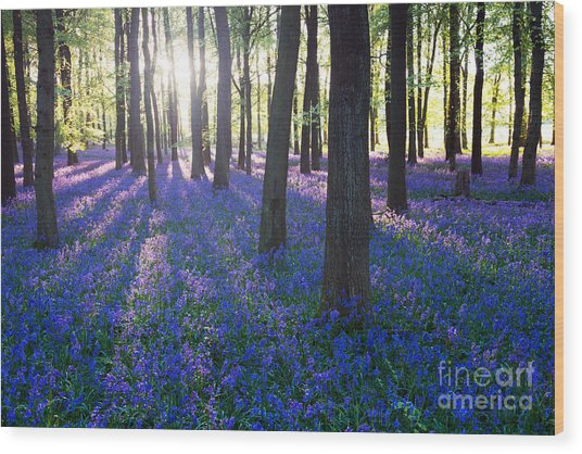 Purple Bluebell Woods In Early Morning Wood Print