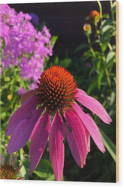 Wood Print featuring the photograph Purple Coneflower by Lukas Miller