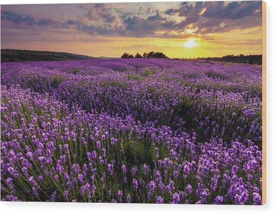 Purple Sea Wood Print