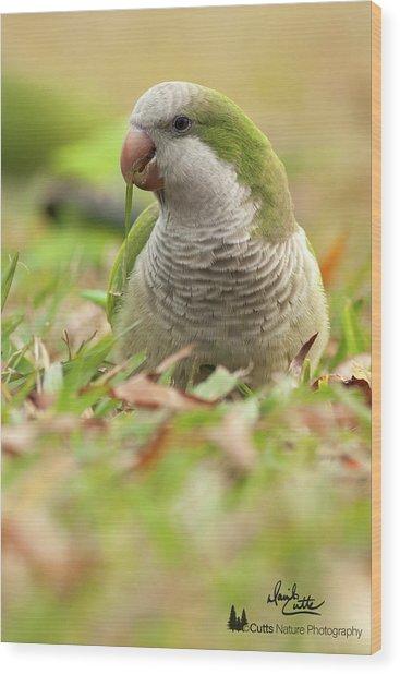 Quaker Parrot #3 Wood Print