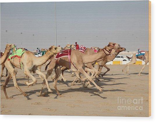 Racing Camels With A Robot Jockeys Wood Print