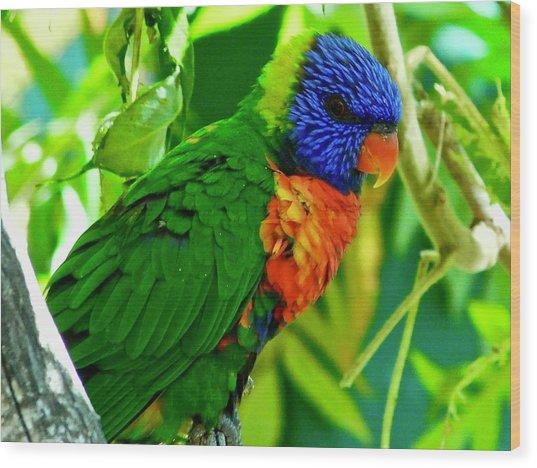 Wood Print featuring the photograph Rainbow Lorikeet by Dan Miller
