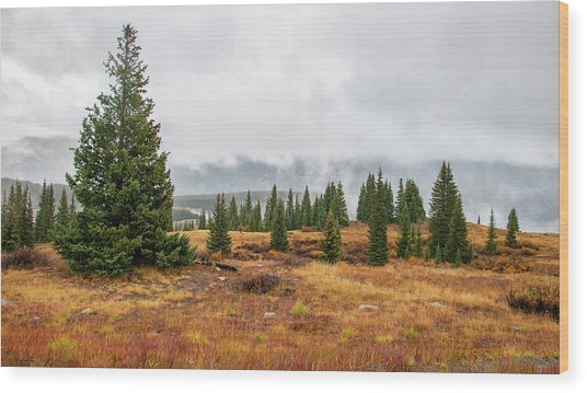 Rainy Day At Molas Pass Wood Print