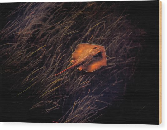 Ray In The Grass Flats Wood Print