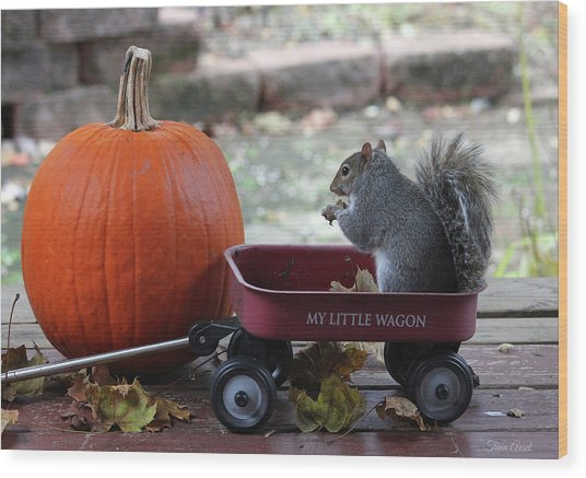 Ready To Ride My Little Red Wagon Wood Print