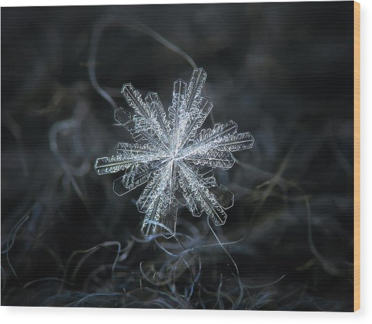 Wood Print featuring the photograph Real Snowflake - 18-dec-2018 - 3 by Alexey Kljatov