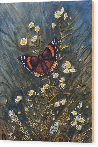 Red Admiral And Wild Aster Wood Print