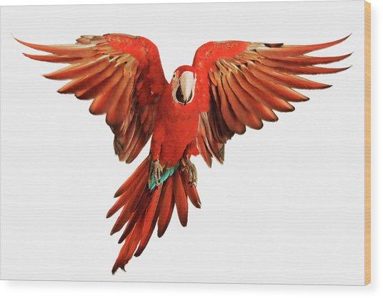 Red-and-green Macaw Ara Chloroptera Wood Print by Martin Harvey