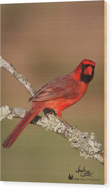 Red And Radiant Wood Print