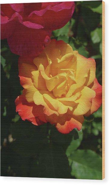 Red And Yellow Rio Samba Roses Wood Print