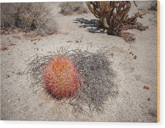 Red Barrel Cactus And Mesquite Wood Print