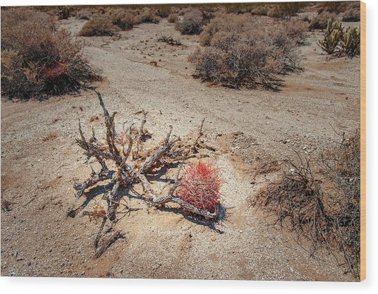 Red Barrel Cactus Wood Print