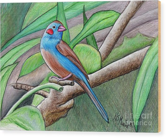Red Cheeked Cordon Blue Finch Wood Print