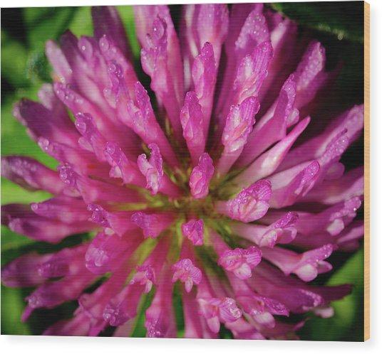 Red Clover Flower Wood Print