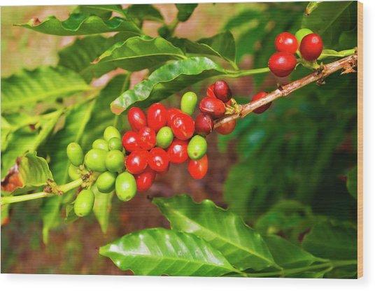 Red Coffee Cherries On The Vine Wood Print by Russ Bishop