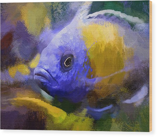 Red Fin Borleyi Cichlid Artwork Wood Print