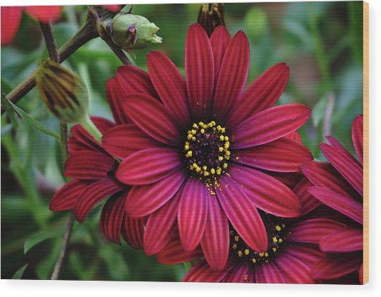 Red Flower - 19-5611 Wood Print